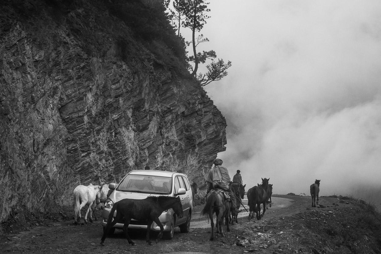 shepherd meeting modern cars on srinagar leh highway