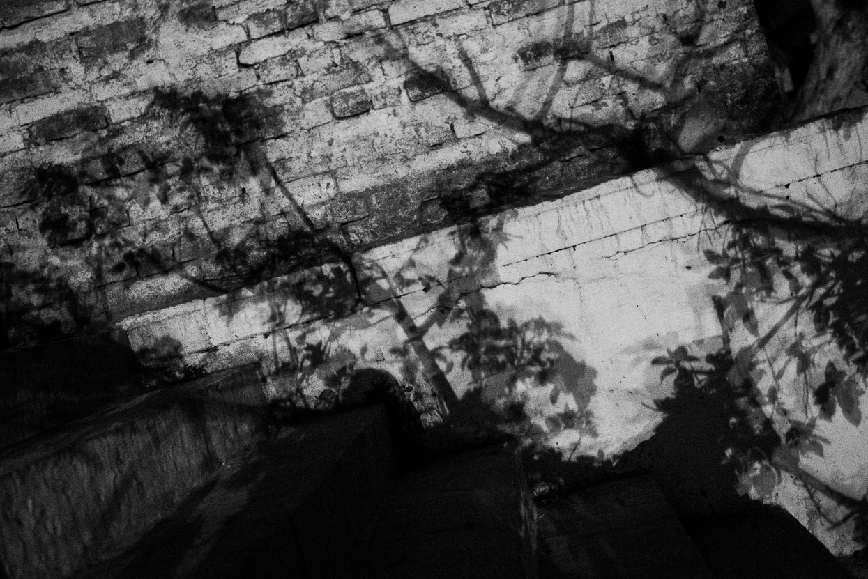 shadows of tree on the walls at dandi ghat in varanasi