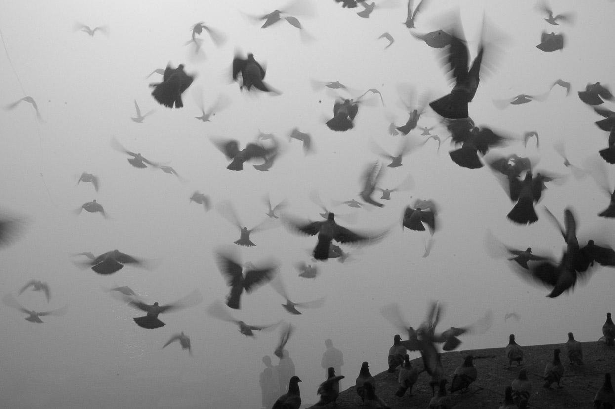 pigeons flying at munshi ghat in varanasi india