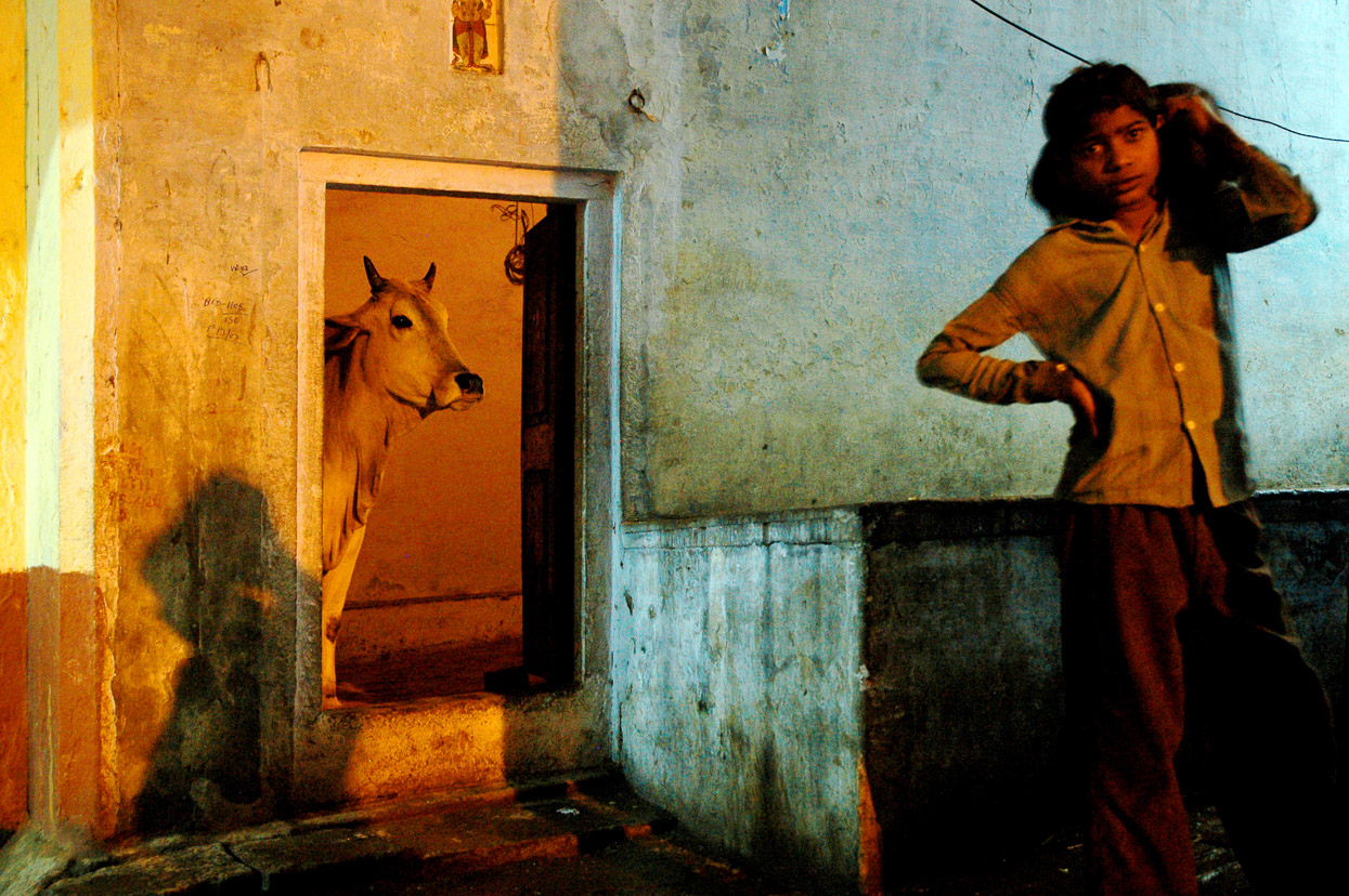Cow standing in the door at night in Varanasi